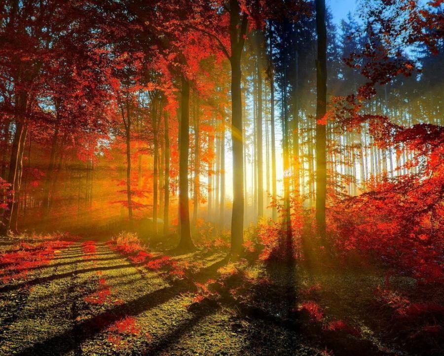 sunlight shines through wood