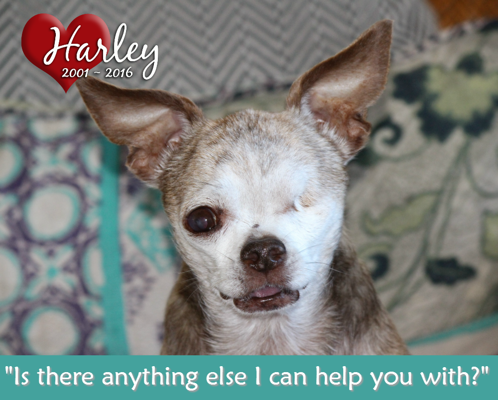 One Of Harley S Friends Shared With Us The Following Story And We Love It Please Consider Doing The Same And Then Tell Us Ab Puppy Mills Animals Little Dogs