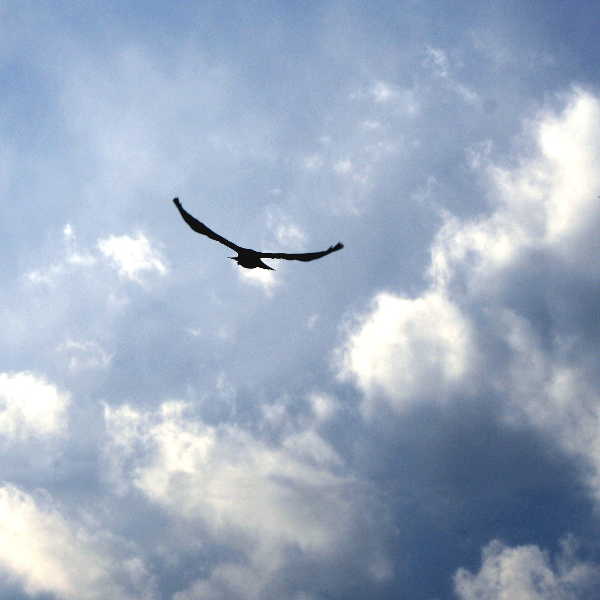 free images of birds bird flying in blue sky with clouds free
