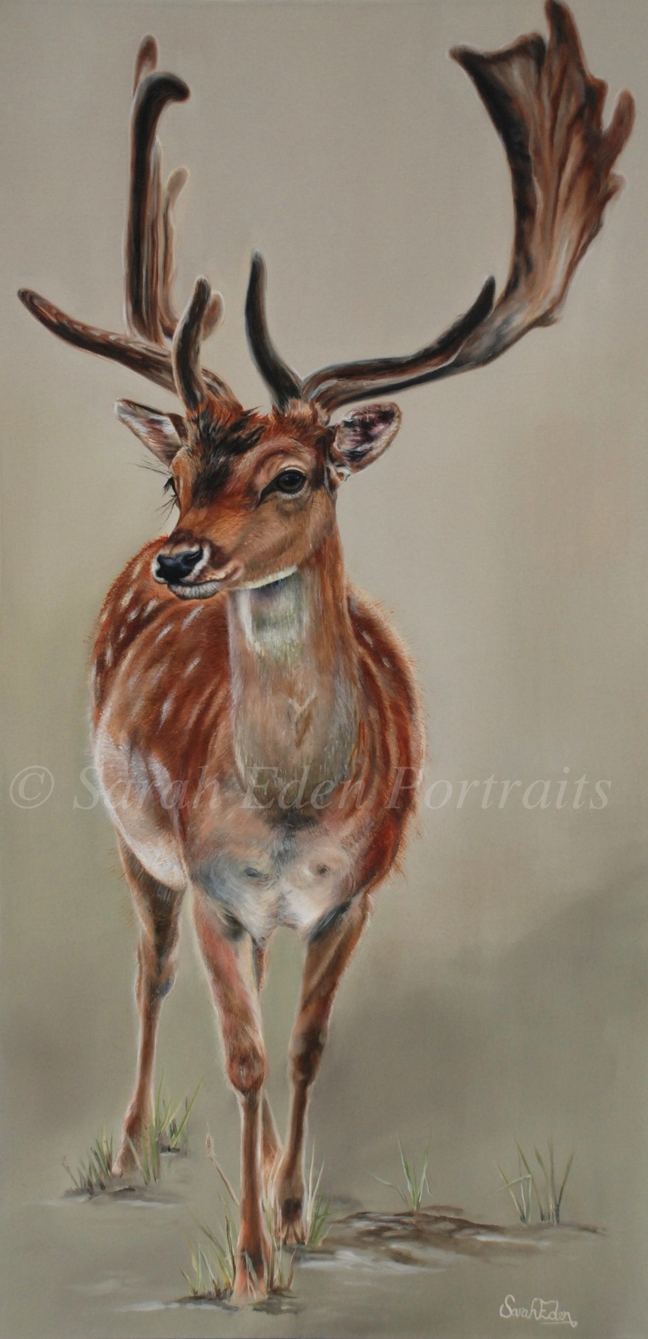 Fallow Deer Painting Sarah Eden. 'spotted' Oil Block Canvas 50 X 100 Cm
