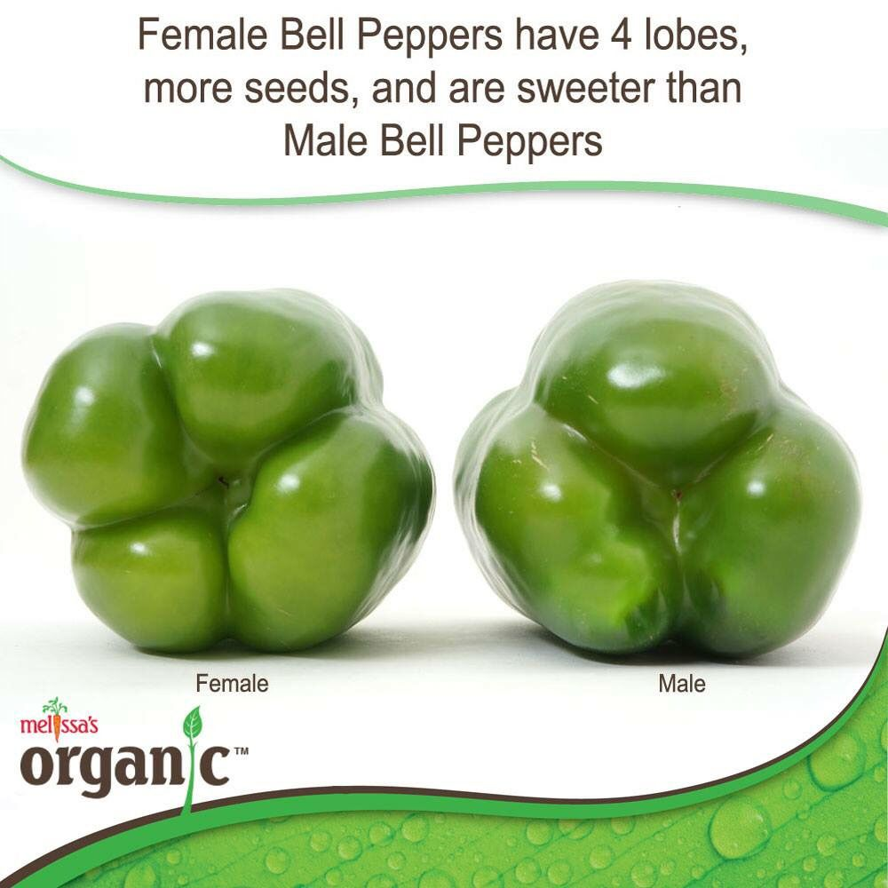 Male Amp Female Bell Peppers Helpful Tips For Food