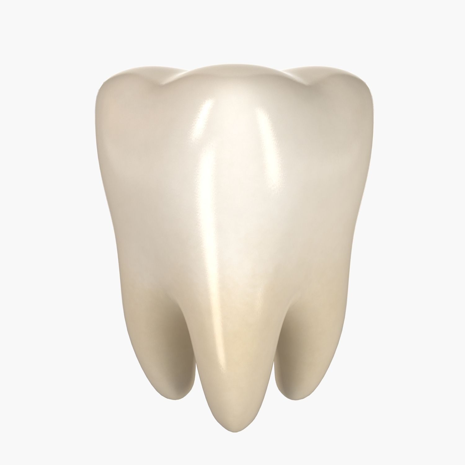 3d Model Teeth Molar Tooth Anatomy People Human Mouth