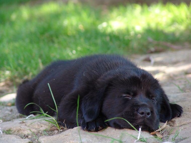 Erstmal Ne Pause Labrador Retriever Deine Tierwelt De Gelb Und Braun Susse Hunde Welpen