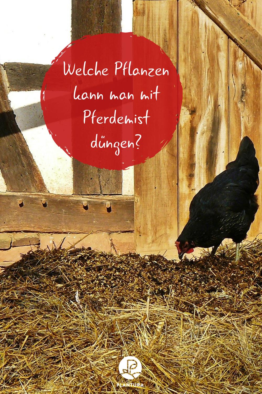 Pferdemist als Dünger Wirkung & Anwendung   Plantura ...