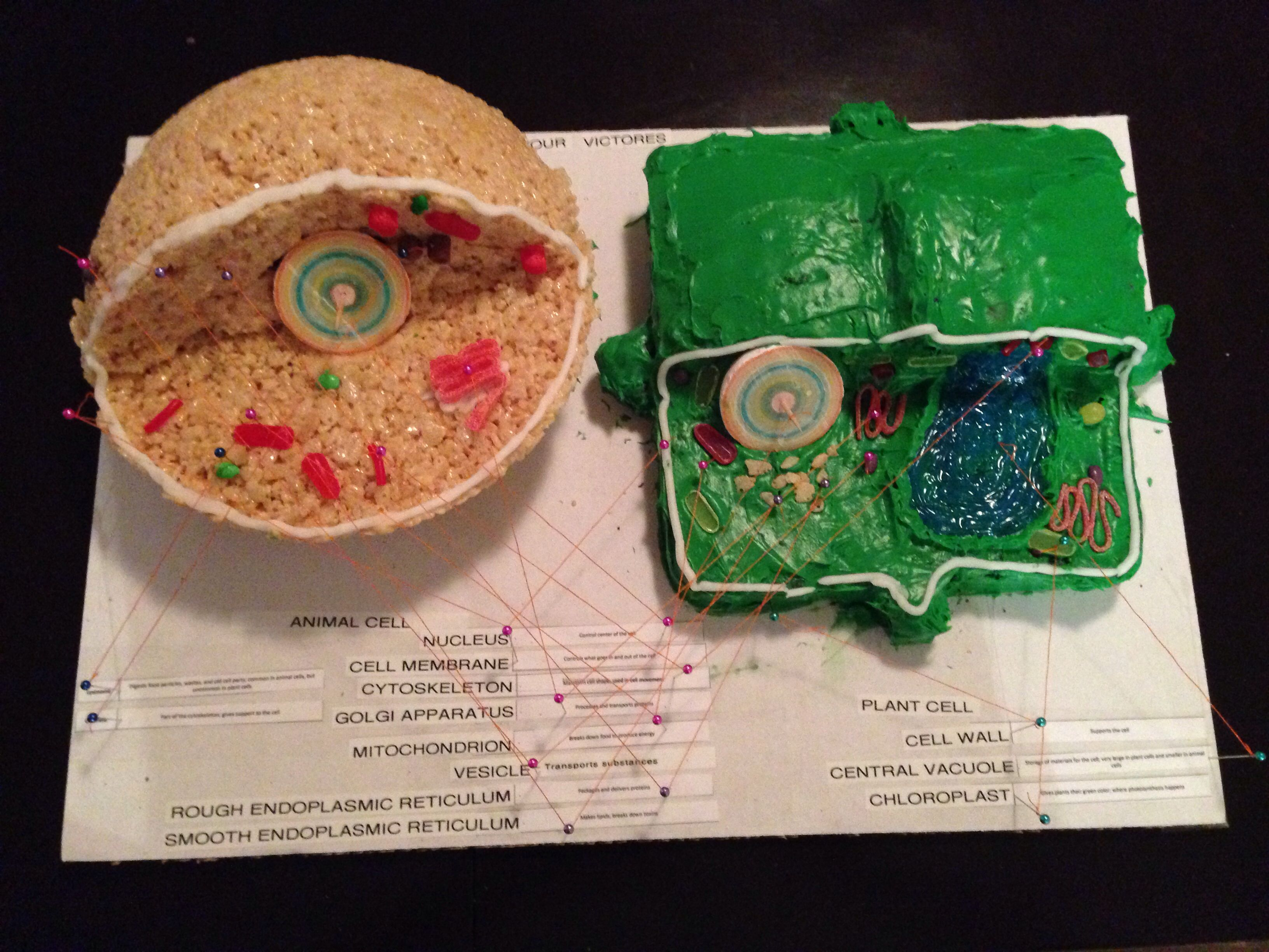 Plant and animal cell model cakes | For the kids | Edible ...