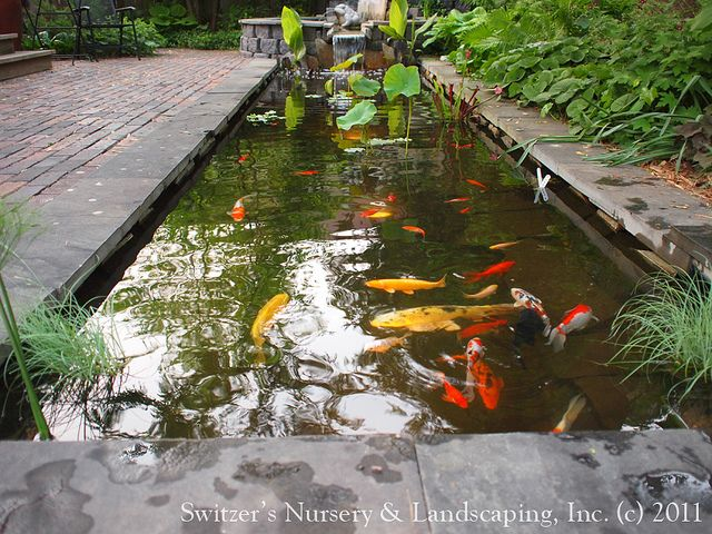Landscape Natural Koi Pond