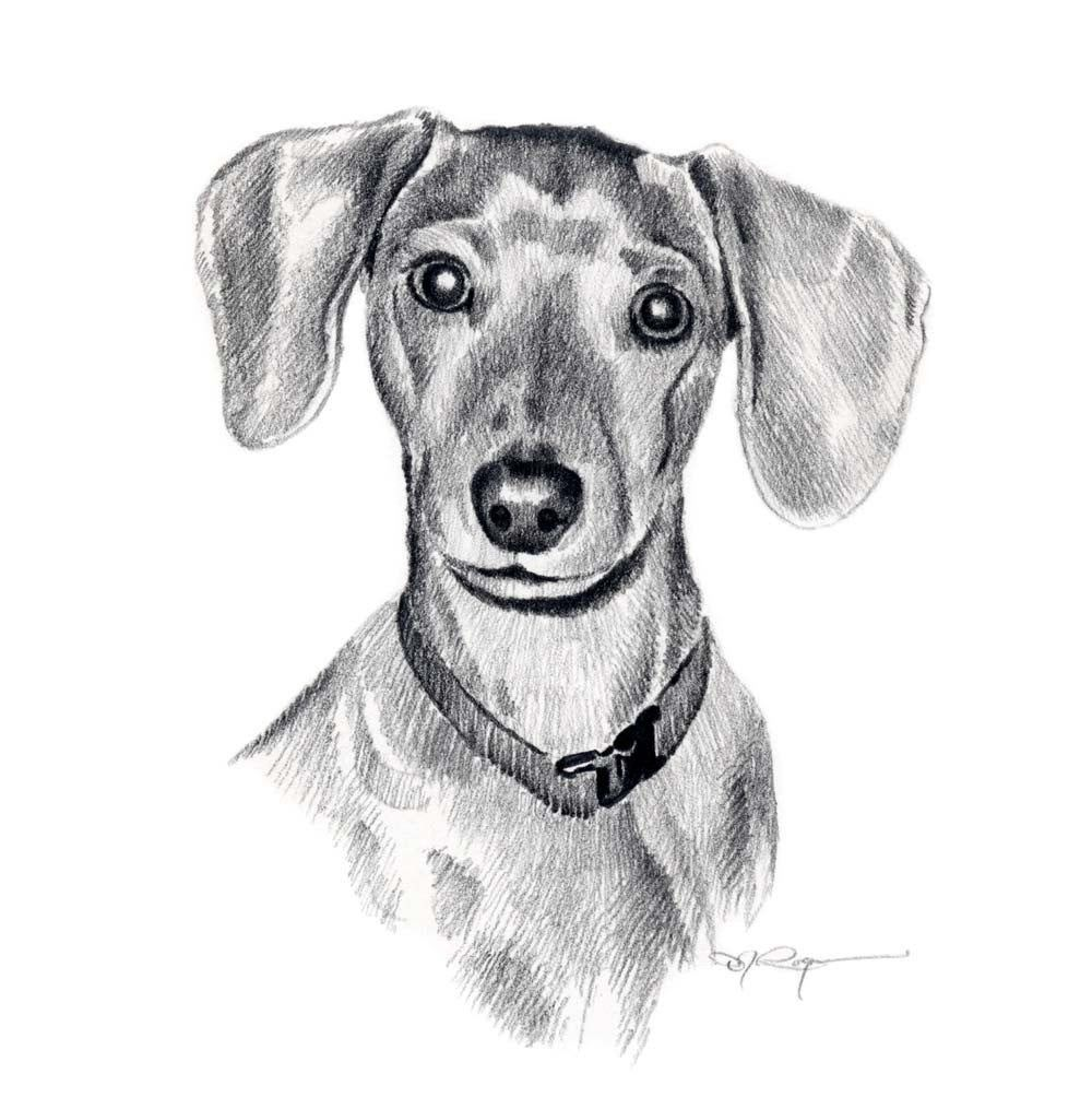 Miniature Dachshund Dog Pencil Drawing Art Print Signed By Dieren Tekenen Hond Tekeningen Tekenkunst