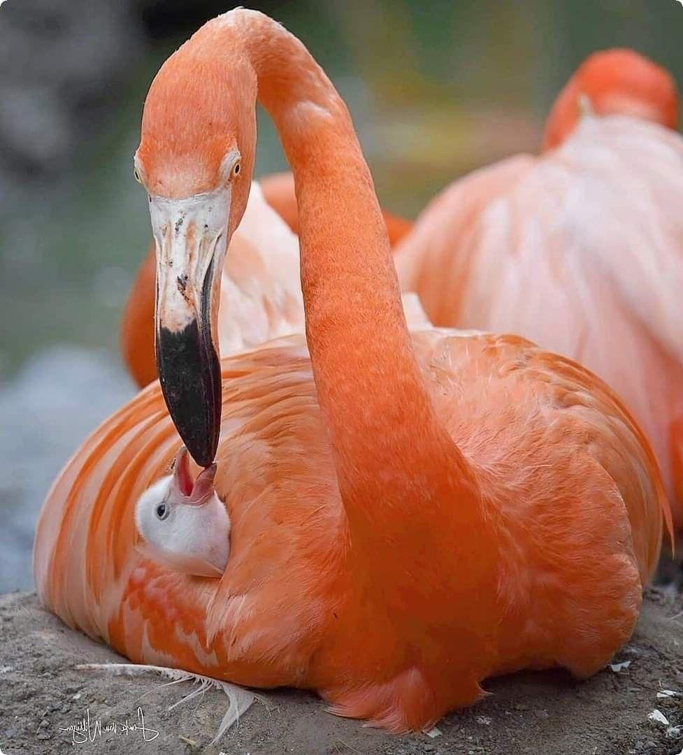Pin About Aves Y Animales Y Sus Crias On Hermosos Companeros