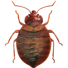 Commercial Pest Control Services In Pune A Safeguard Pest Management Services Pest Control Services Pest Management Pest Control