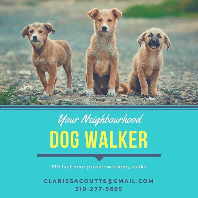 Hey Halifax dog lovers! . Contact Clarissa for dog walking