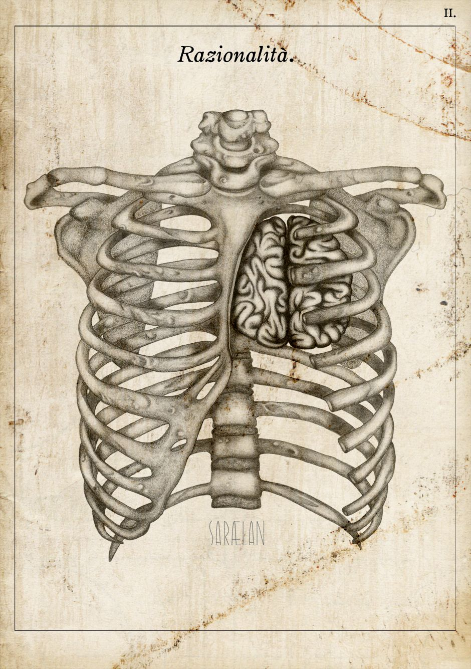 Anatomy Lessons Series By Saraelan Illustration Graphzine