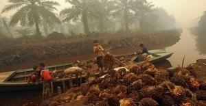 """Grandes empresas venden como """"sostenibles"""" productos con aceite de palma producido por mano infantil"""