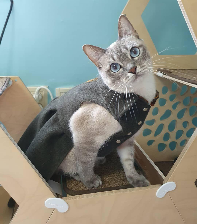 젤리네가 joelle_review 묘델이 되었어요... cat ideas diy cat care
