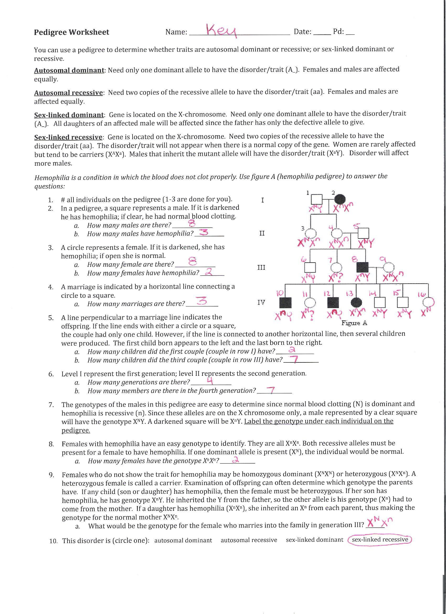 Pedigree Worksheet Answers To Pedigree Worksheet