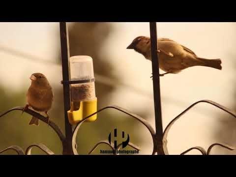 فكرة صدقة إطعام العصافير Youtube Wall Lights Candle Sconces Sconces