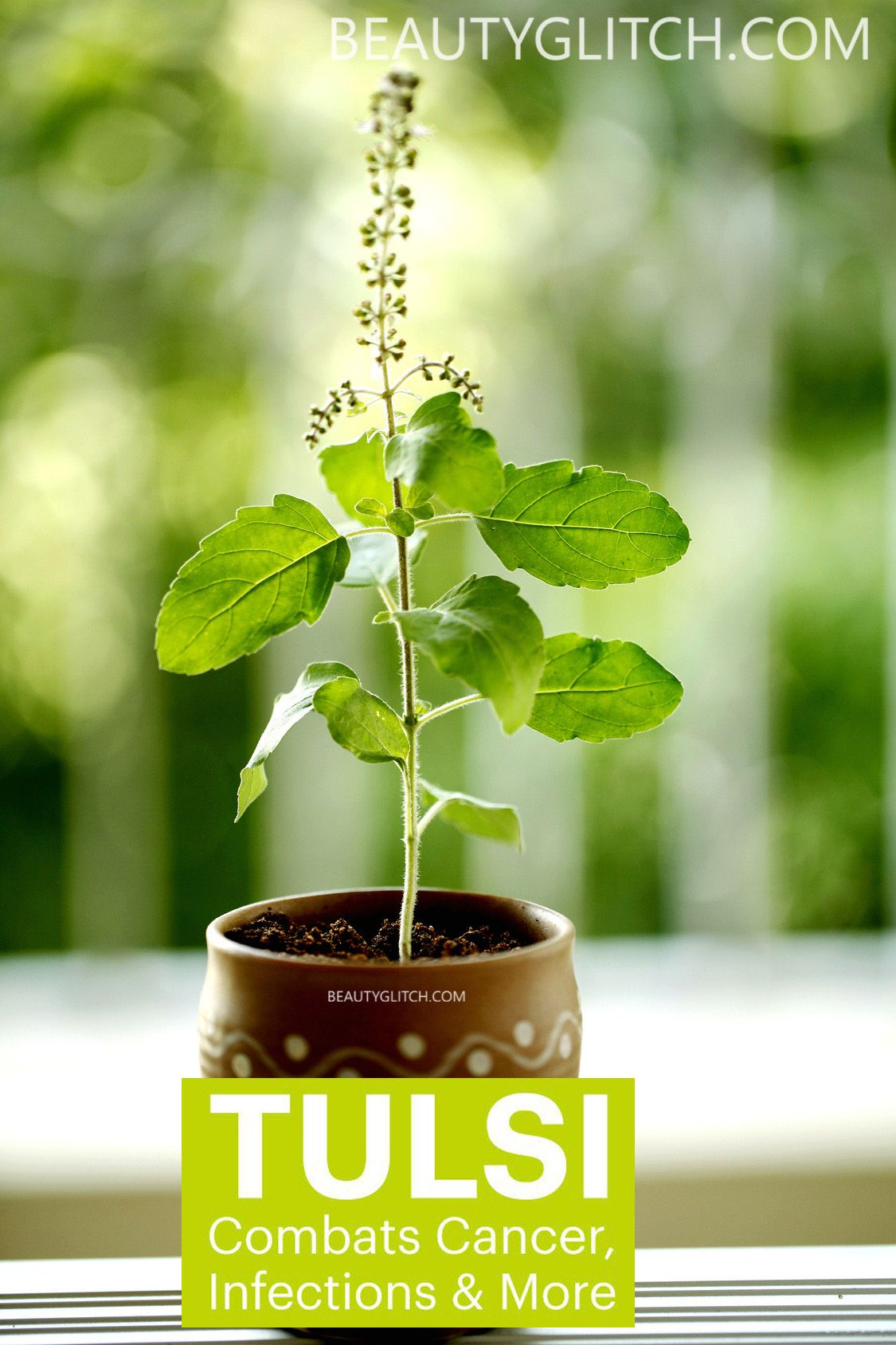 5 Medicinal Benefits Of Tulsi (Basil) That Could Save You