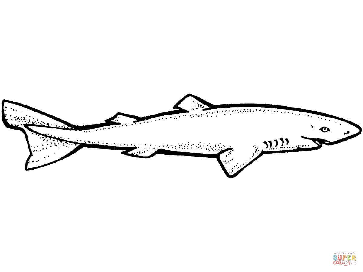 Horn Shark Coloring Page Free Shark Coloring Pages Greenland Shark Animal Coloring Pages