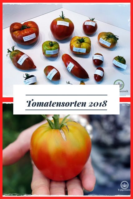 tomatensorten f r die gartensaison 2018 gartenblog topfgartenwelt tomatensorten aussaat. Black Bedroom Furniture Sets. Home Design Ideas