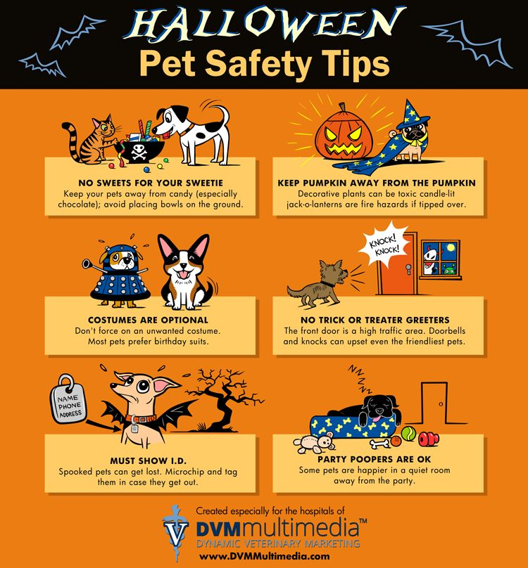 Image result for halloween uk safety tips for pets