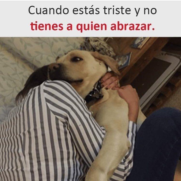 Top 1 Top1 Pizza Lossimpson Venezuela Peru Argentina Colombia Like Funn Memes De Animales Divertidos Perros Graciosos Humor Divertido Sobre Animales