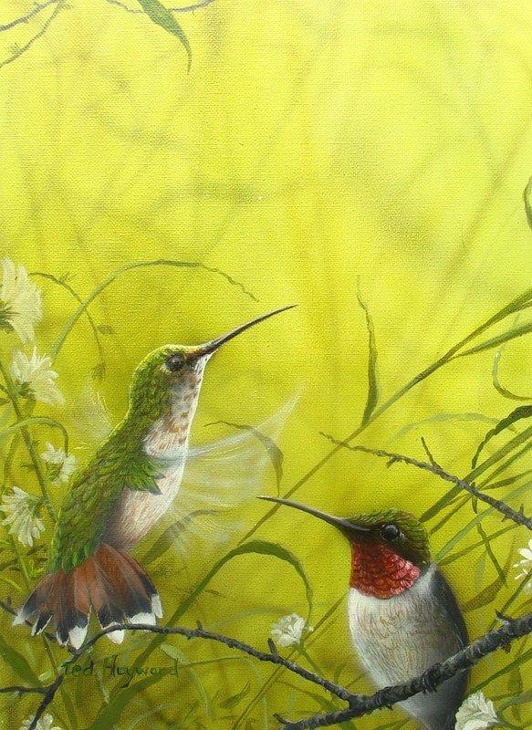 """Hummingbirds"", acrylic painting by Ted Hayward. #art #artwork #animals #animalart #wildlifeart #painting #hummingbird #hummingbirds #birds #birdart #oilpainting #realism"