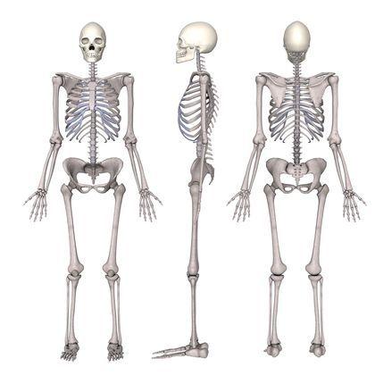 It takes 10 to 16 lbs  of pressure to break a human bone
