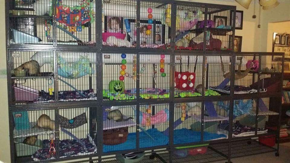 Ferret condo Ferret cage, Pet rat cages, Pet ferret