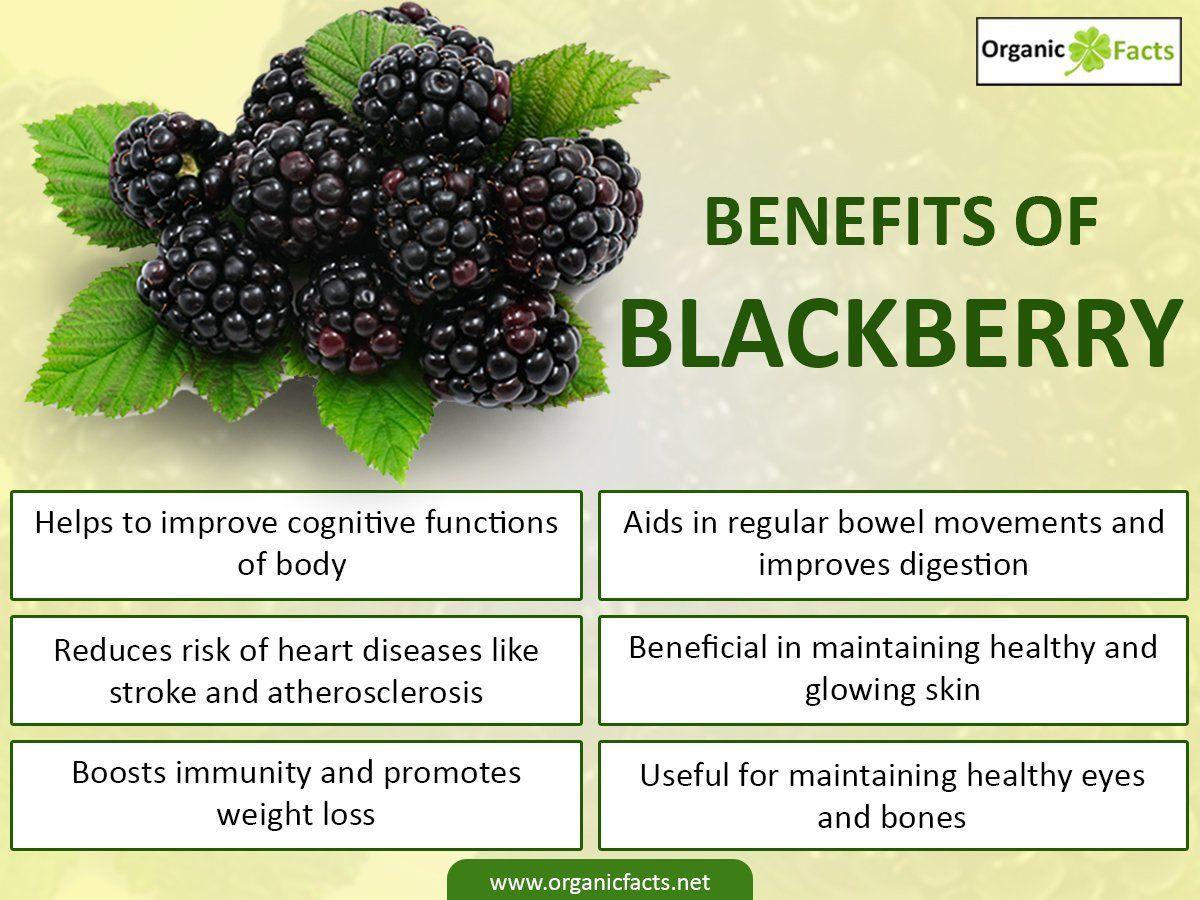 15 best blackberry benefits | blackberry nutrition, benefits