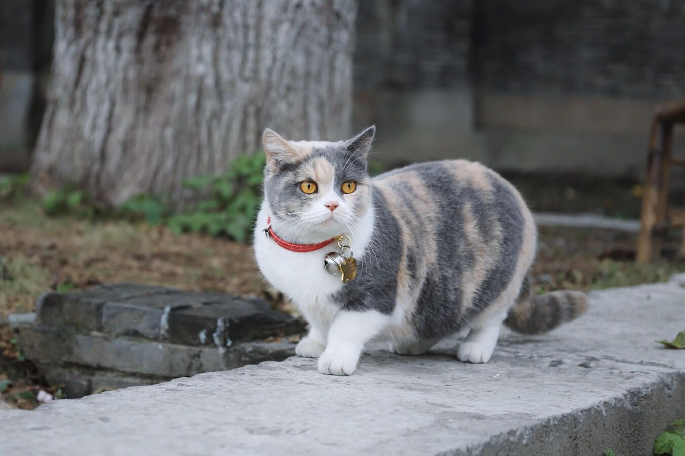 5 Best Cat Flea Collars Reviews And Buyer Guide 2019 Cat Fleas Cat Flea Collar Cat Photography