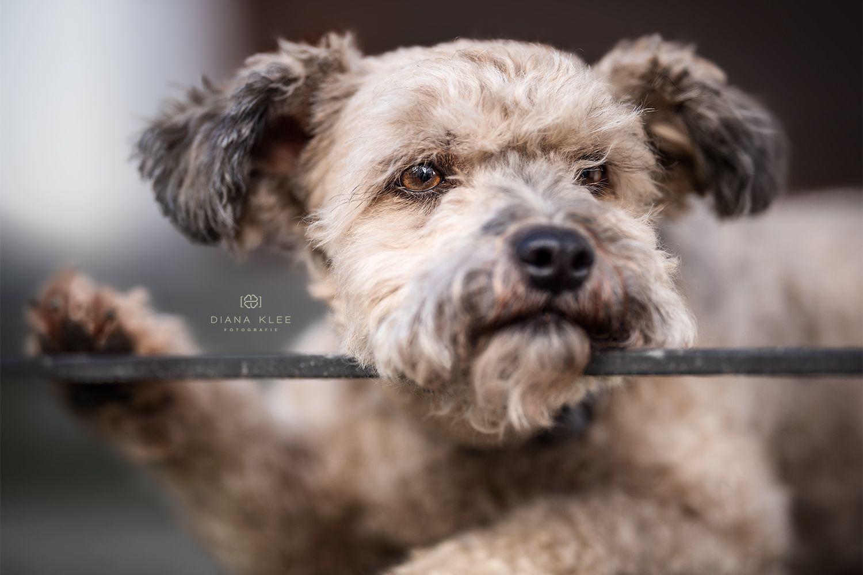 Hundefotografie Im Markischen Kreis Und Nrw Diana Klee Fotografie Hundefotografie Hundefotos Hunde Fotos