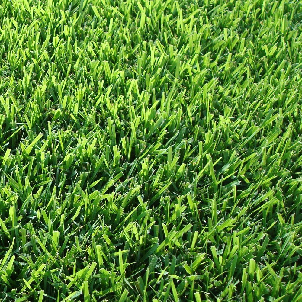 Harmony 500 Sq Ft Zoysia Sod 1 Pallet Hh500z1 Grass Alternative Zoysia Grass Zoysia Sod