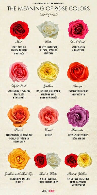Pin by cynthia diane deviney hightower on cinderella dreams the meanings of rose colors good to know if youre deciding on rose colors for bouquets centerpieces and other flowers for your wedding mightylinksfo