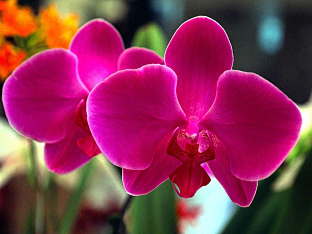 Flores Del Mundo La Orquídea La Flor Más Bella Del Mundo Flores Exóticas Orquídeas Raras Imagenes De Orquideas