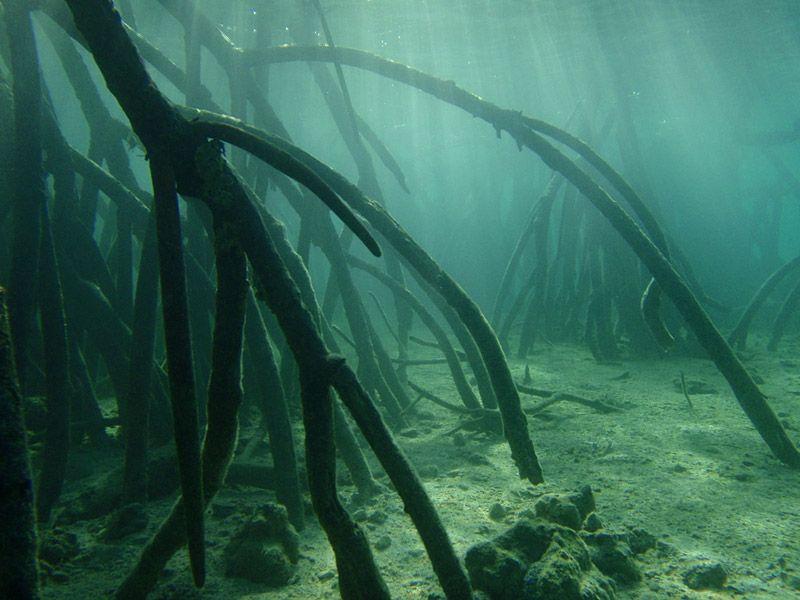 Jmb Aqua Light De Beste Verlichting Voor Uw Aquarium Aquarien Unterwasser Bilder