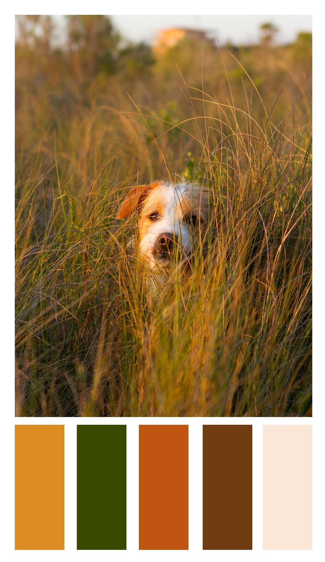 Color Palette For Daly The Mixed Breed Dog (Labradorterrier)