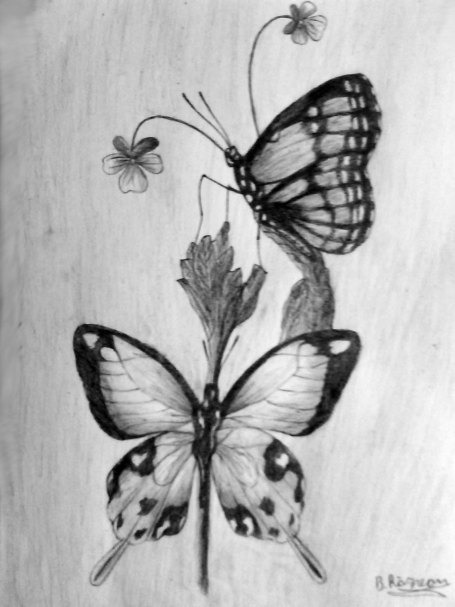 Simple Pencil Drawing Of A Butterfly