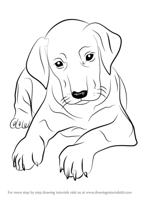 Pictures Of Dogs Black And White Easy To Draw