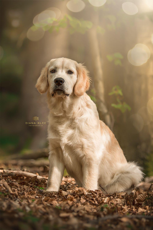 Hundefotografie Im Markischen Kreis Und Nrw Hundefotografie Hunde Hundefotos