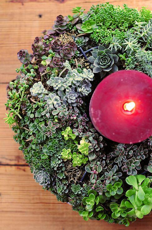 Succulent wreath...gorgeous.