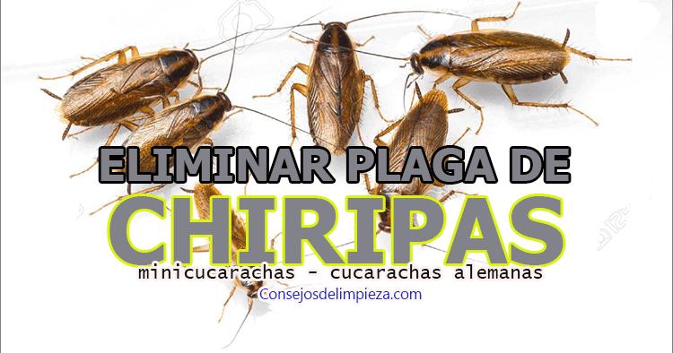 Como Acabar Con La Plaga De Cucarachas Chiquitas Remedios Caseros Naturales Para Eliminar Las Plagas De Mini
