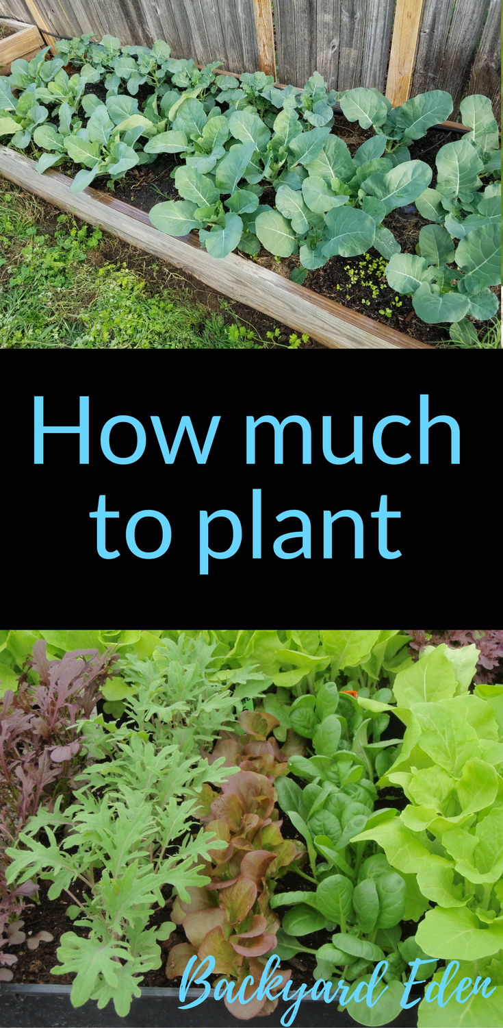 much to plant How much to plant | How many of each plant to grow | Organic Gardening | Organic Gardening for Beginners | Planning a garden | Organic Fertilizers | Gardening Tips | Vegetable Gardening | Backyard-How much to plant | How many of each plant to grow | Organic Gardening | Organic Gardening for Beginners | Planning a garden...
