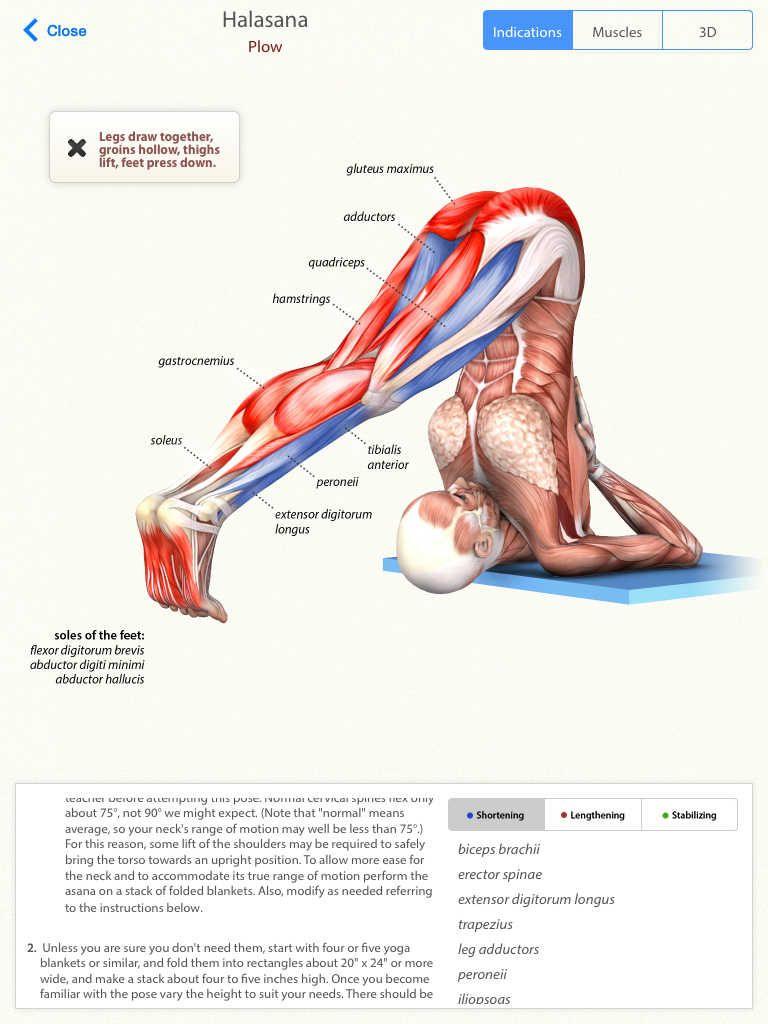 Halasana #yoga #anatomy | Anatomy | Pinterest | Yoga anatomy, Yoga ...