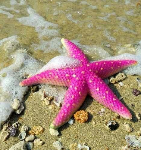 pink starfish marine life needle felting starfish  pink starfish