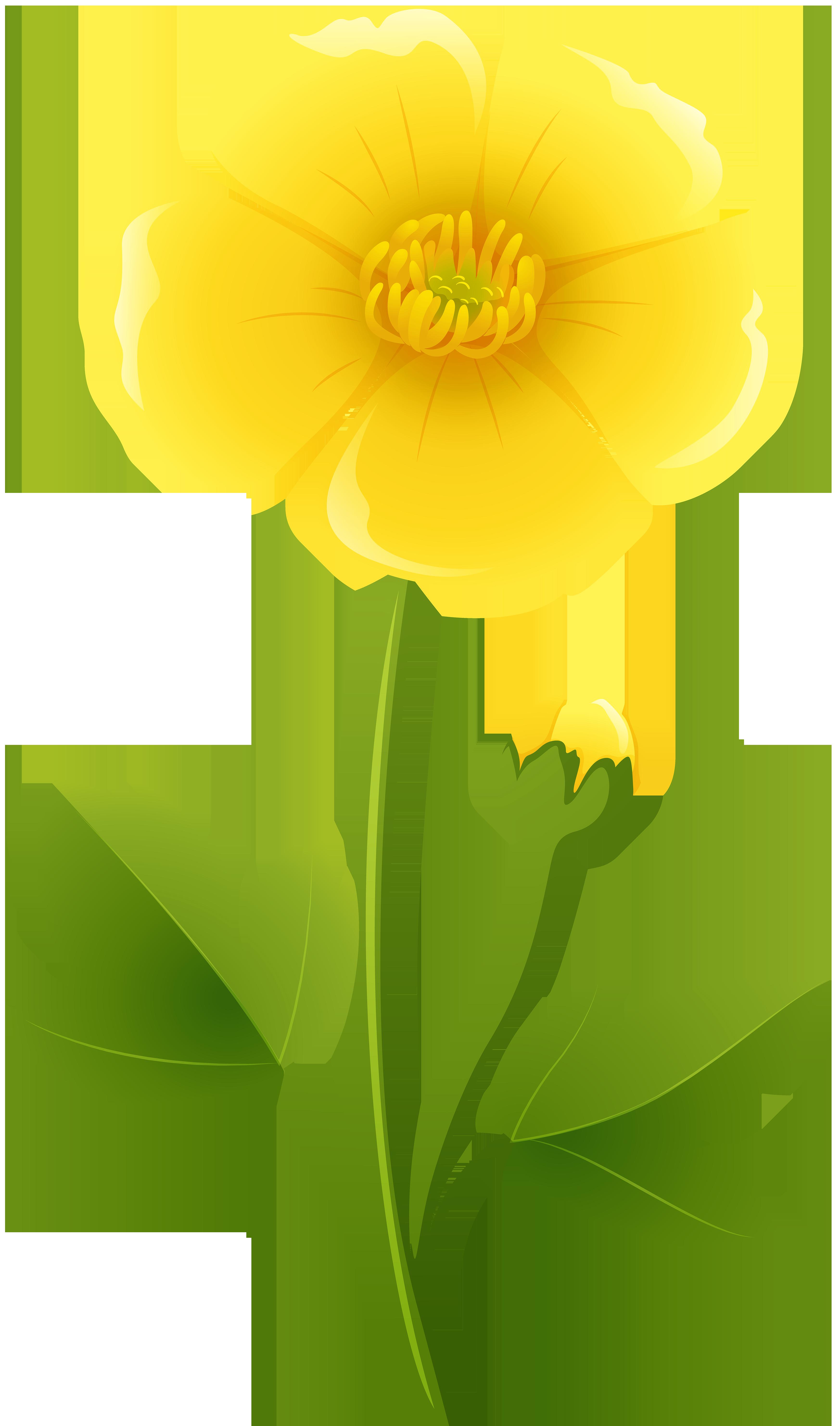 Yellow Flower Transparent PNG Clip Art Image Blue flower