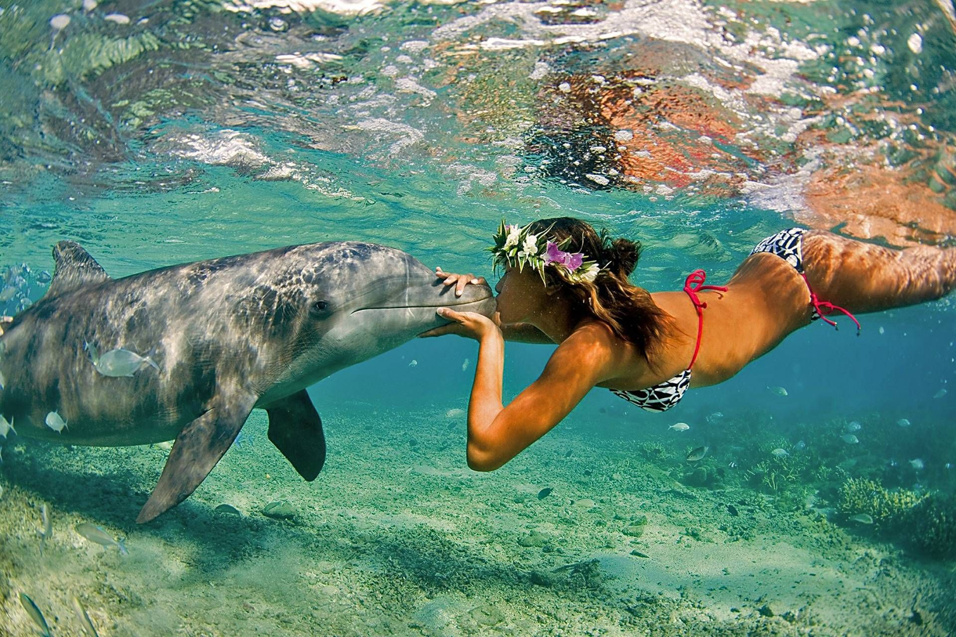 Cool Photo Of Girl Kissing Dolphin Off The Coast Of Bali Dolphins Animals Pictures