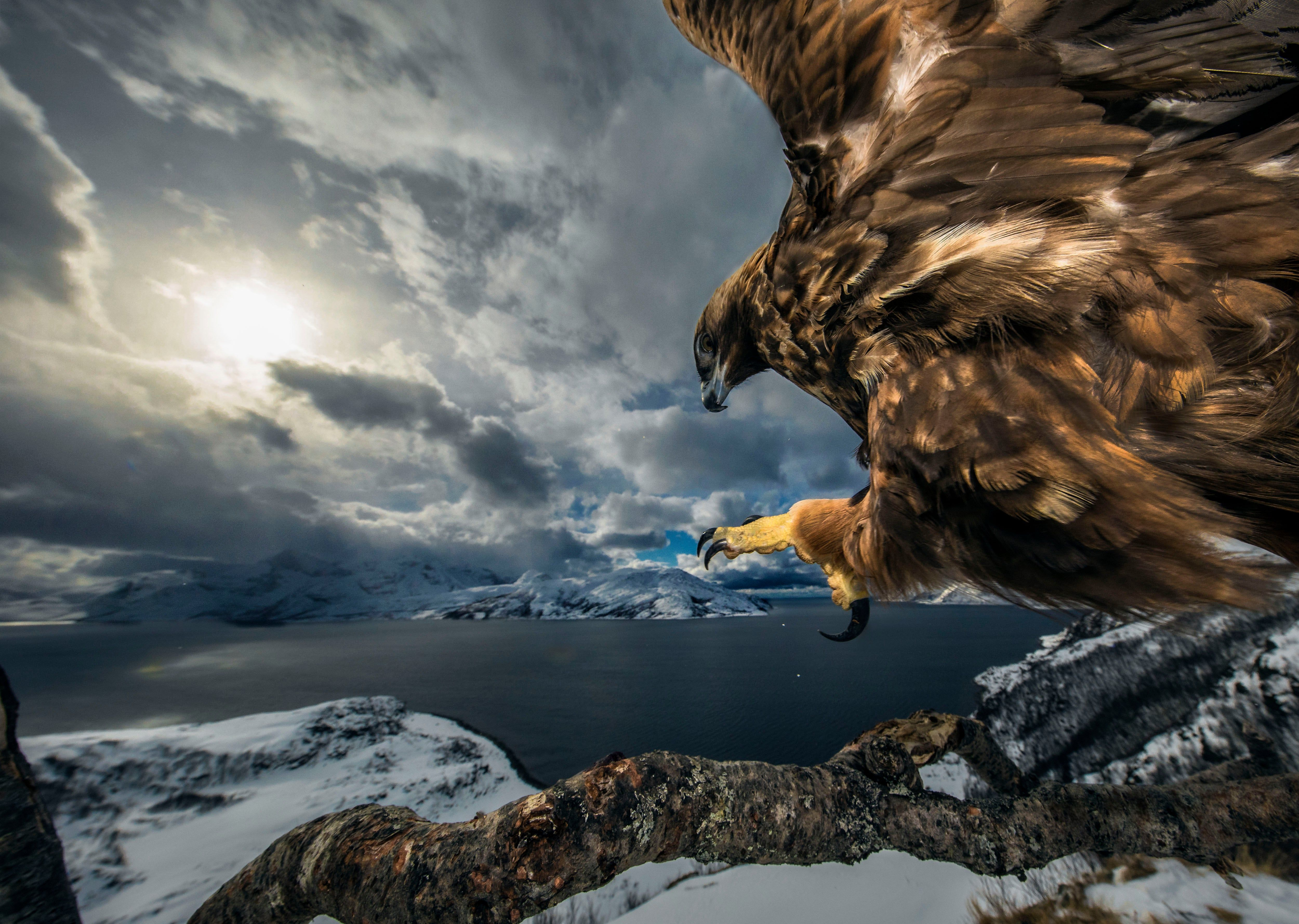 Wildlife Photographer Of The Year 2019 Winners In Pictures Wildlife Photography Wildlife Nature Photographs