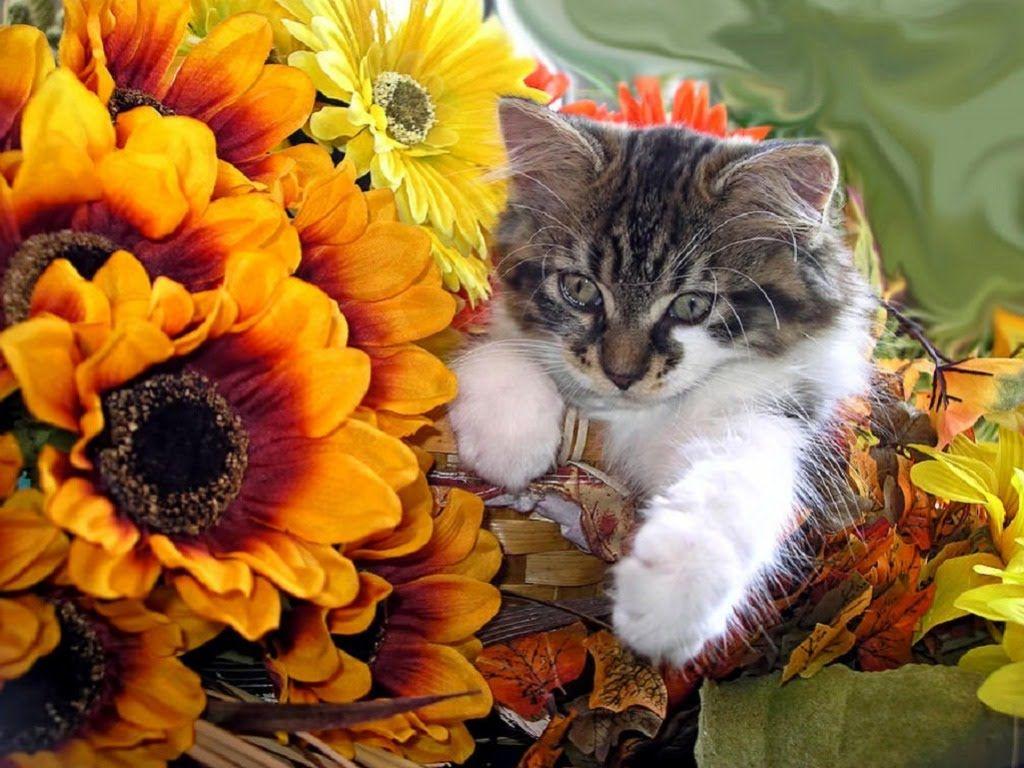 Best Cute Kittens Funny Video pilation Cute Cat Kittens top 10