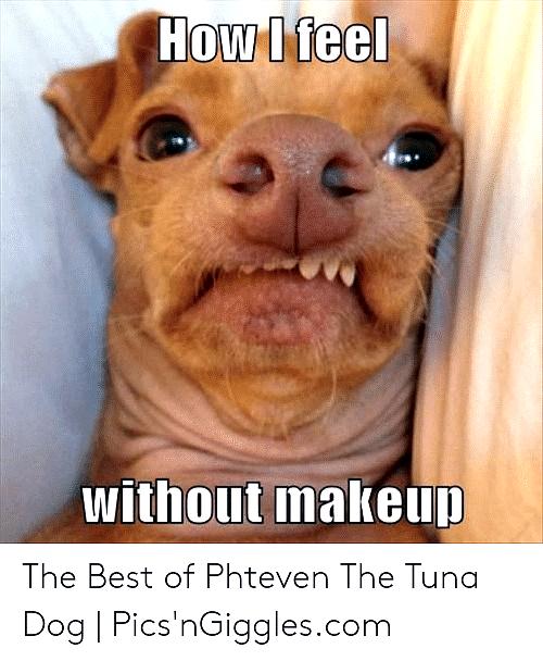 Rofl Dog Memes Dog Meme 2020 Dog Jokes Funny Dog Memes Boxer Dogs Funny