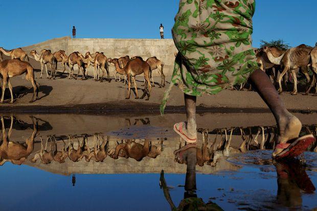 De l'eau dans le désert - Sur les traces d'Homo sapiens, de l'Éthiopie à Djibouti - National Geographic