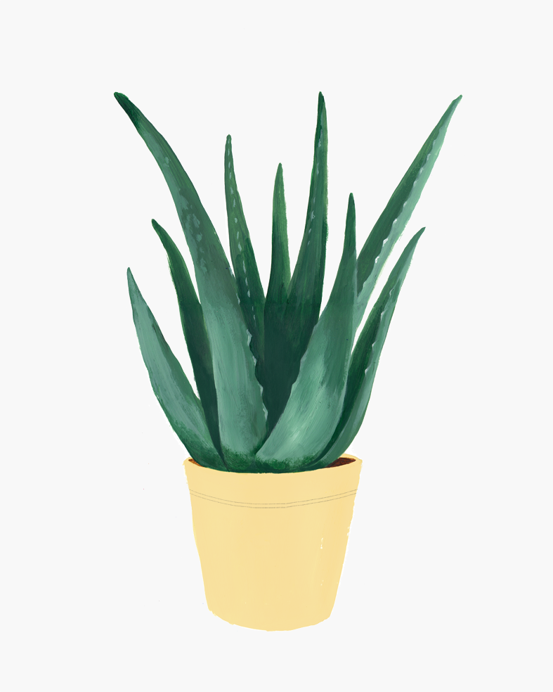Hermano Gato - Aloe